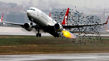 01bird strike